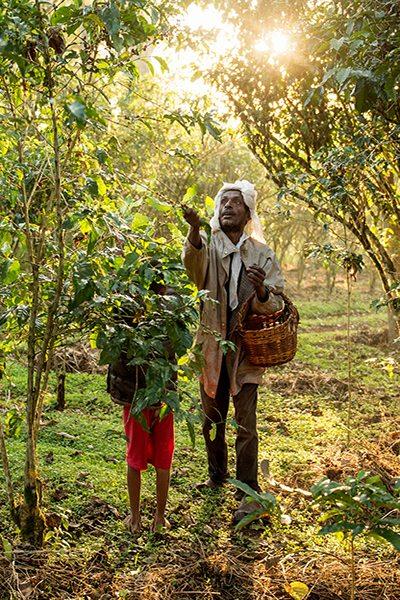 Ethiopia Coffee Beans